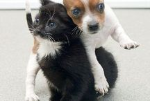 interspecies friends