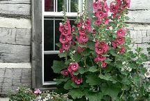 country gardens / by Cynthia Morgan