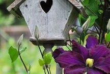 Gardens and External Areas / Alegres, acolhedores e lindos.