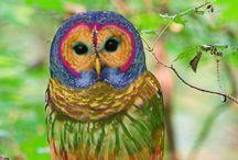Owls / by Gina Dewan