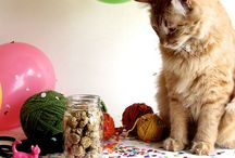 Cats - DIY food and treats