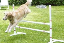 Dogs DIY - Exercise & training
