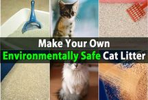 Cats - Hygiene / Grooming, the litter box, teeth hygiene