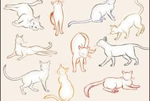 Drawing - Cat Anatomy & References