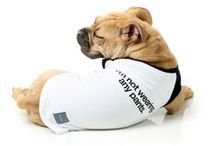 Dog T-Shirts / Your dog will show their style and attitude wearing our super cool t-shirts!