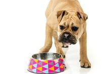 Dog Bowls / Our easy pet feeders makes feeding time a breeze.