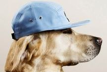Dogs with SWAG!