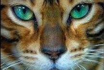 ❁ C A T S / CATS, CAT, GATOS, GATO
