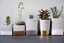 Secret Life of Plants / by Mirka Šurková