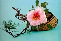 Ikebana & High Style / by Camilla Lyle