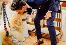 Pets - Casamento
