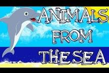 School- Animals From the Sea / Animals that live under the sea and A House For Hermit Crab materials / by Samantha Remondelli