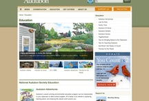 Inspiration: Audubon Website / by 1331 Design LLC