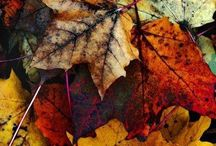 [fall]