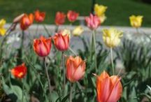 Spring Into Dutchess! / Exploring gardens. Cruising the Hudson River. Dining at a farm-to-table restaurant. Celebrating at a festival. There isn't just one way to enjoy the spring season in Dutchess County. There are many!