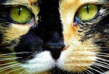 cats my loves