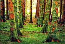 Trees / by Jo Escher