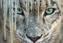 Cats & Kin / by Jo Escher