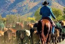 Hey Cowboy!! / by Linda Lou