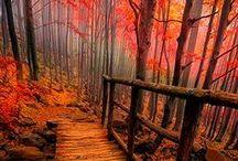 The Path / by Jo Escher