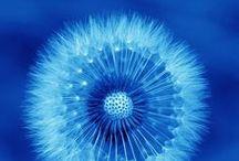 Blue / Colorterapia / Chromotherapy