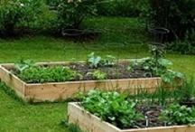 Gardening / by Jennifer Kidd