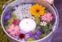 Flowers / wild flowers are my favorite