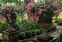 Garden splendour