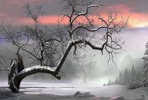 Winter / by Nadine Hupp