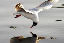 Bird Spectacular