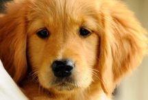 DOGs- I love them