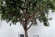 Arbre déco / Installer un arbre dans votre déco intérieure! Plutôt saugrenue comme idée. C'est pourtant de plus en plus tendance de planter un arbre au milieu de votre salon ! Dépaysement garanti !