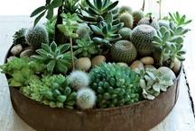 Garden Green / All things Garden!  / by Amanda Cathro