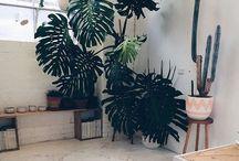// P L A N T // / #plants #succulents #flowers #leaves