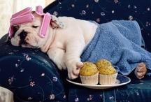 Cute Dogs! / #Cani carini, teneroni, simpaticoni e divertenti.