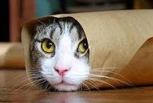 Cute Cats! / Scatti improbabili di #gatti curiosi che si sono fatti immortalare in pose assurde!