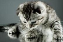 Cute Animals ^_^ / Tutti gli #animali carini, teneri, giocosi e spiritosi.