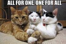 Animals:  Cats 2