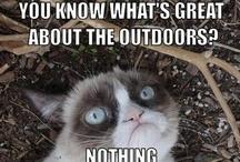 About Me:  I AM Grumpy Cat