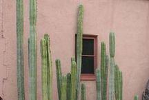Cactus / by Clare Nicolson