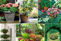 Gardening / by Joyce Kennedy