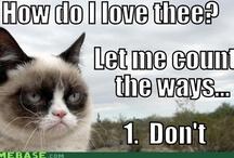 About Me:  I AM Grumpy Cat ~ 2