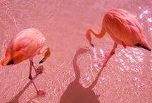 Flamingos Make Me Smile / by Cynthia Ray