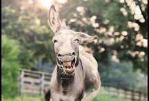 Animals:  Donkeys