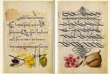 caligrophy & card ideas / by Annie Boone