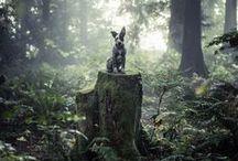 My Dog / by Adam Ragan