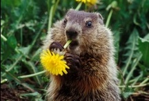 Our Favorite Animal / by WOODCHUCK