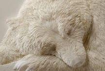 ♥ Polar bear ♥