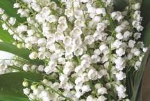 Flowers I LOVE~