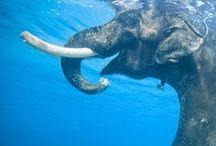 Elephant / by Cari Summer